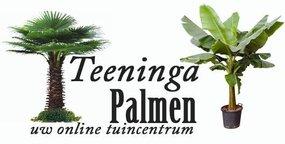 Hoe is Teeninga palmen ontstaan