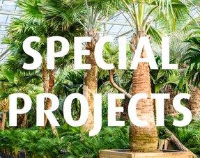 Spezielle Projekte