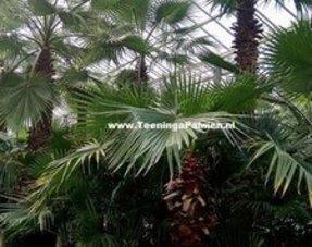 Tropische kamer planten