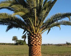 Kamer palmen