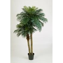 Künstliche Palmen-Zwergkrabben-Palme Phoenix rubesii MULTI TRUNK 210 CM