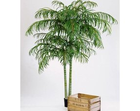 Kunst palmen
