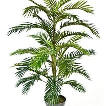 Palme Areca Goldpalme 120 cm hoch