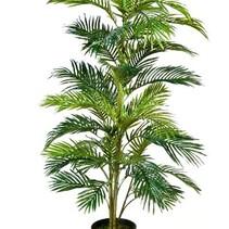 Palme Areca Goldpalme 150 cm hoch