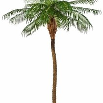 Art Palm Phoenix Röteln extra luxuriöse Ausführung nackten Stamm - 225 cm