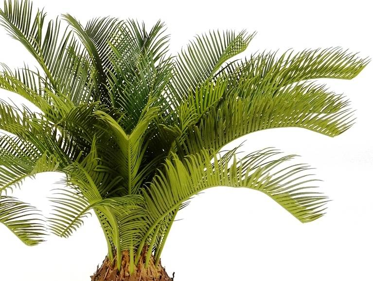 kunstpalm vredespalm cycas revulta 65 cm teeninga palms. Black Bedroom Furniture Sets. Home Design Ideas