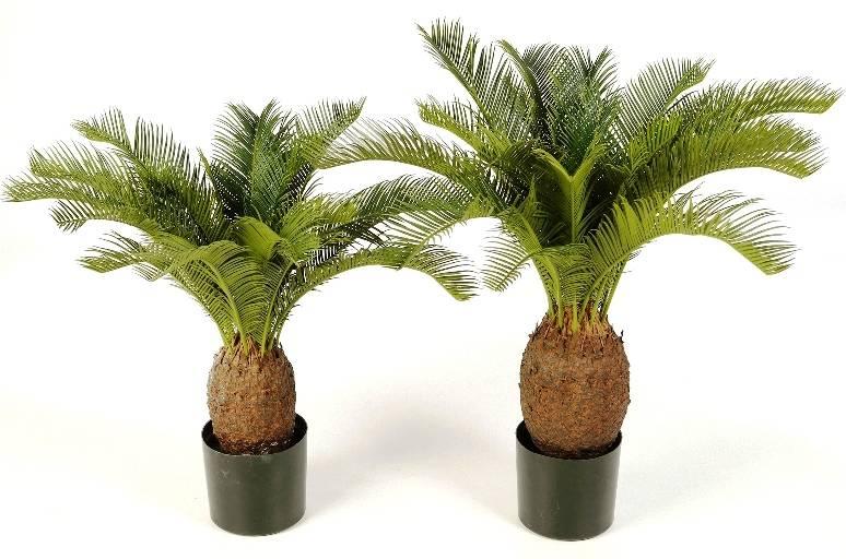 kunstpalm vredespalm cycas revulta 65 cm teeninga palms. Black Bedroom Furniture Sets. Home Design Ideas