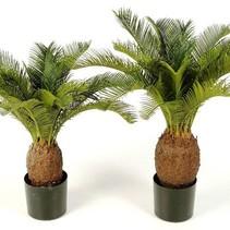 Art Palme Frieden Palm Cycas Revoluta 70cm