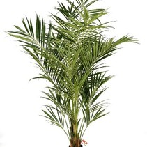 225 cm - Howea Forsteriana Kentia Palme künstliche Pflanze