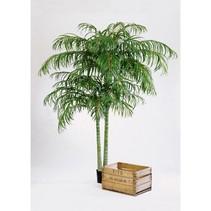 210 cm - Areca Goud palmboom extra luxe uitvoering