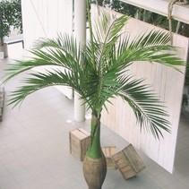 Große Flasche Palme 345 cm hohe künstliche Palme