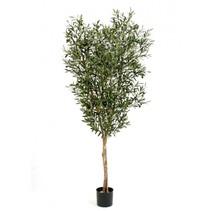 120 cm - Binnen olijfboom Kunst olea olijfboom
