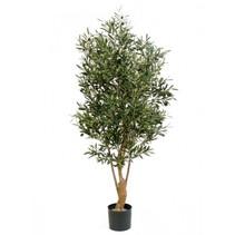 150 cm - Binnen olijfboom Kunst olea olijfboom dikke stam Twisted