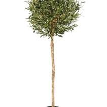 140 cm Kunst Olea Olijf in bol vorm met olijven