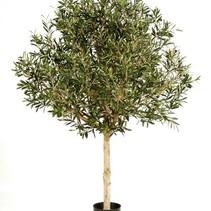 210 cm  Kunst Olijfboom met een dikke stam en een grote bladerkroon