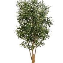 120 cm - Binnen olijfboom Kunst olea olijfboom  met een dikke stam twisted