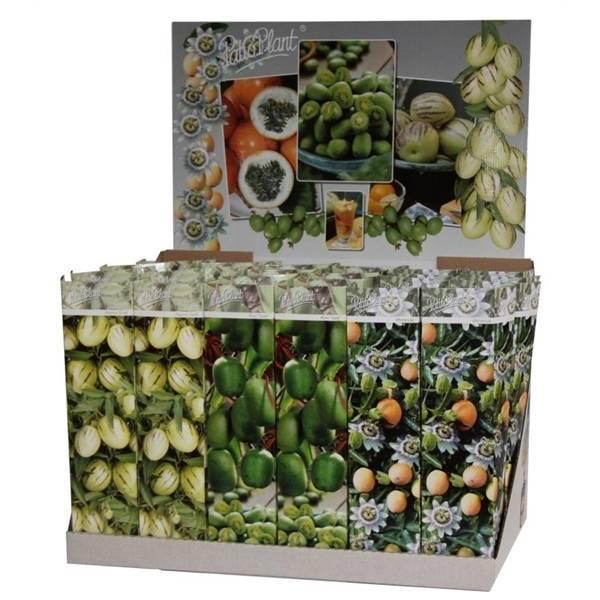 sch ne exotische frucht deko in einem sch nen paket. Black Bedroom Furniture Sets. Home Design Ideas