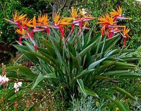 Overige Mediterrane kamer planten