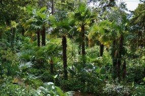 Ziekte verschijning van palmen