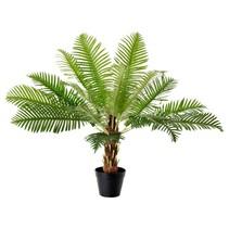 Kunst verhuur palmboom  prachtige net echte palm