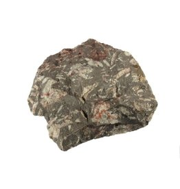 Chrysant steen ruw 175 - 250 gram