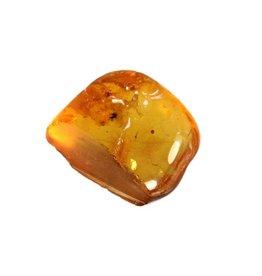 Barnsteen met insect gepolijst 1 - 2,5 gram
