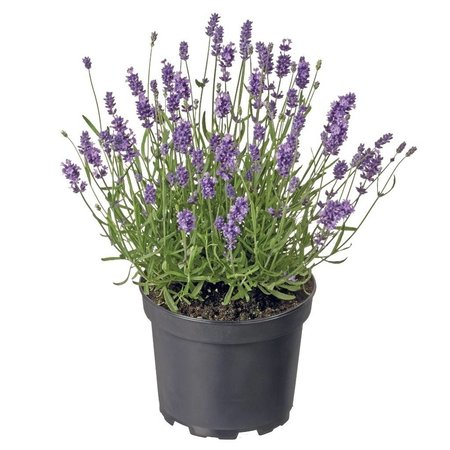 Plant 16