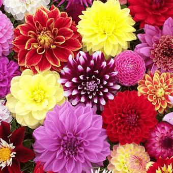 Verzorgingstips bloemen