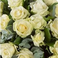 Druppel rozen
