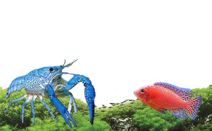 Tropischer Fisch und Kaltwasserfisch!