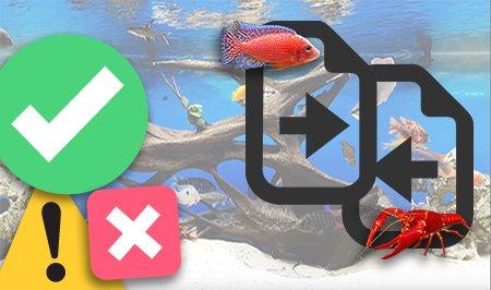 Vissen bij elkaar in het aquarium?