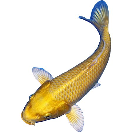 Koi Yellow