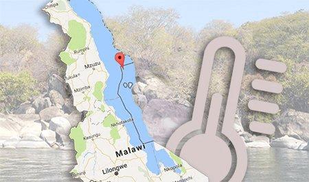 Malawi cichliden houden in een aquarium
