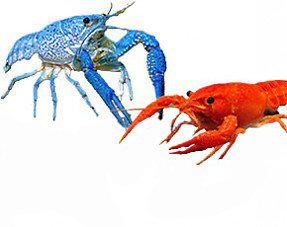 Crayfish & Crab