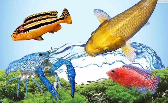 Aquarium vissen kopen online bij Aqua Quality Store