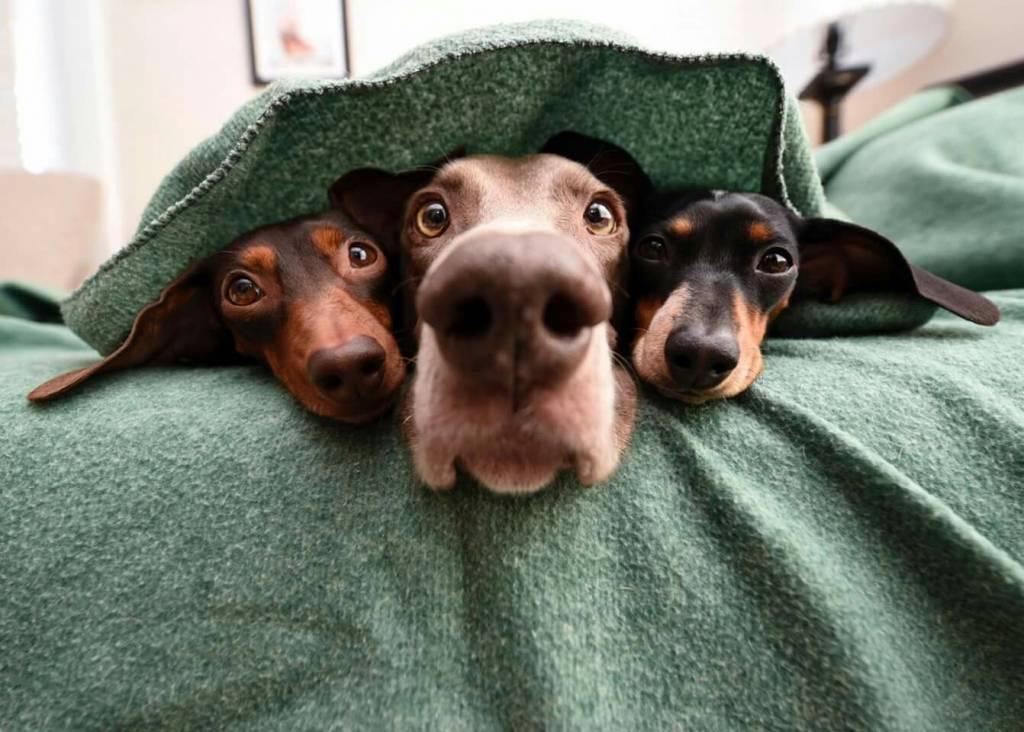 Bitte lächeln: So gelingt das Fotografieren von Hunden garantiert.