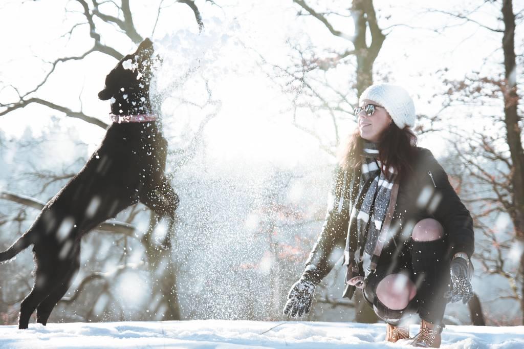 Hunde im Schnee - Manche haben ihn zum Fressen gern