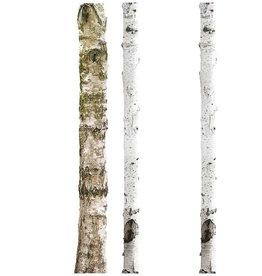 KEK Amsterdam Autocollants arbres