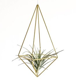Airplants DIY Himmeli Drop