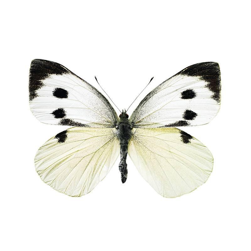 KEK Amsterdam Autocollants papillons