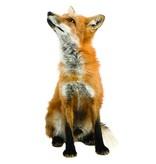 KEK Amsterdam Muurstickers wilde dieren
