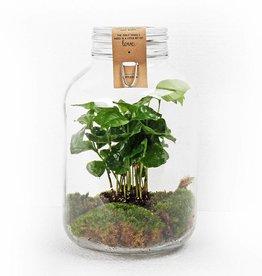 Plante Growing concept