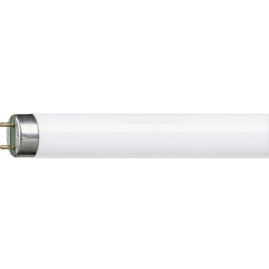 Philips/ Osram TL buis 36W kleur 830 - Groothandel Meppel