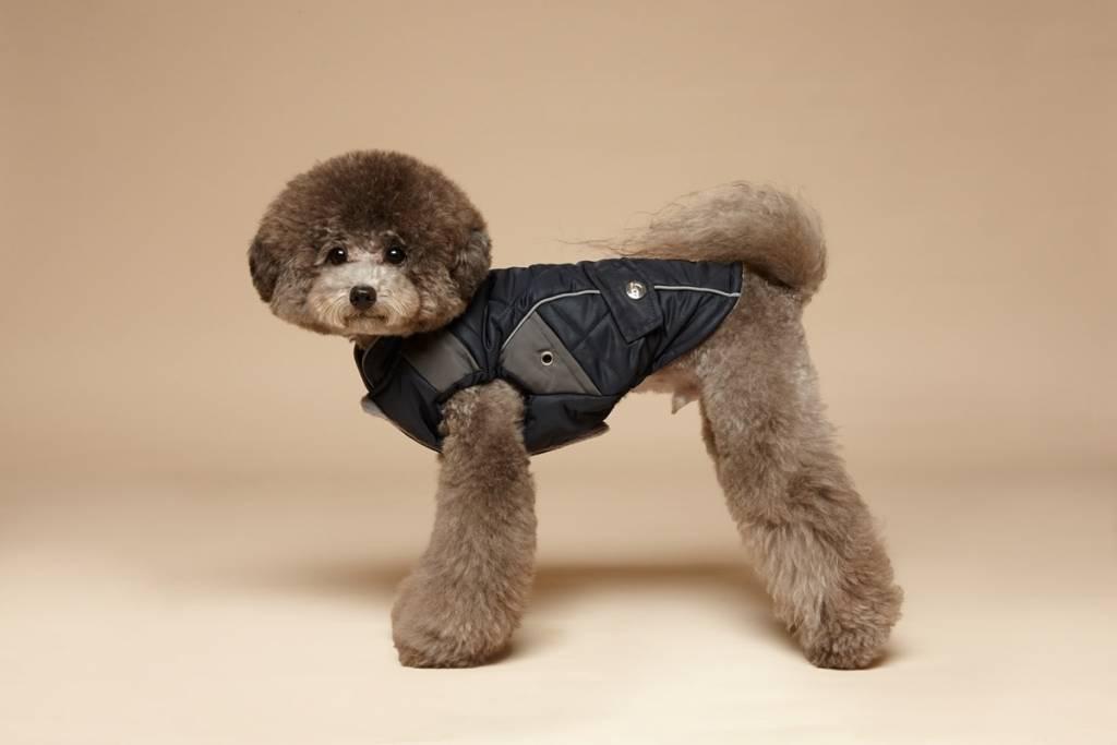 puppy Gallery padding navy bleu smal