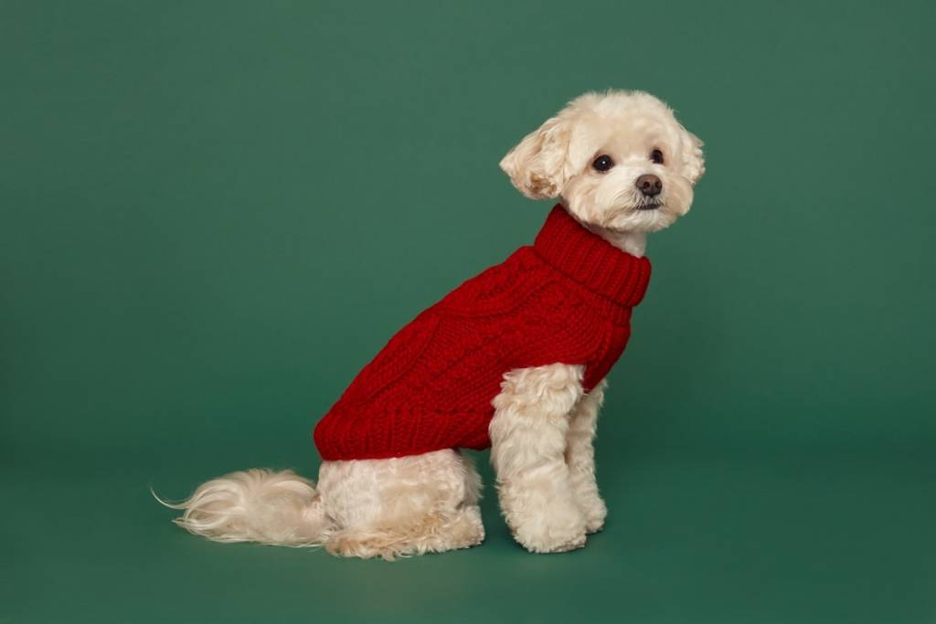 puppy Gallery dog in the city red 2XL