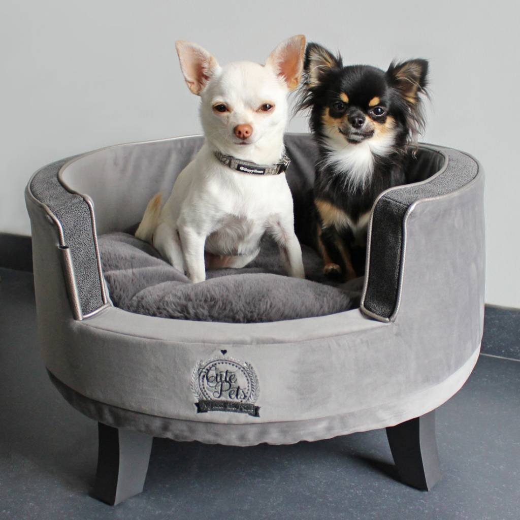 Happy house sofa cute pets grijs