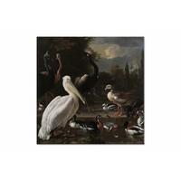 Een pelikaan en ander gevogelte bij een waterbassin • vierkante afdruk op canvas