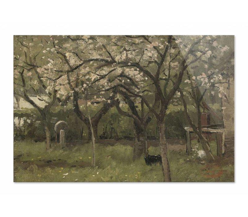 Bloeiende boom in boomgaard • liggende afdruk op plexiglas