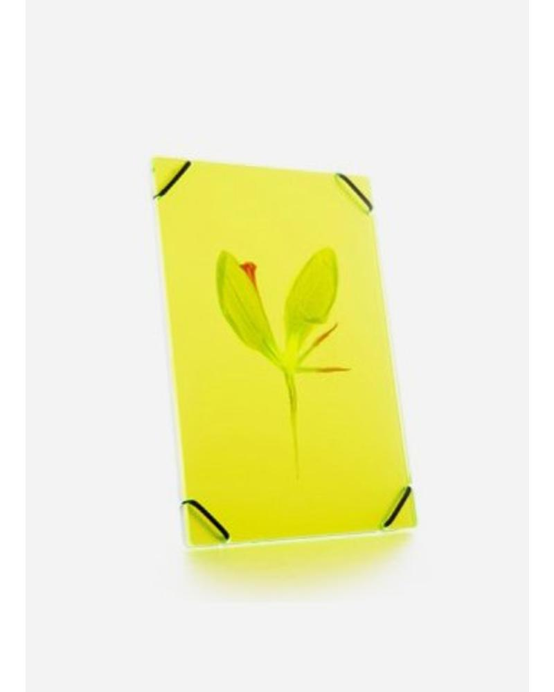 Flowerpress heu frame bright yellow small
