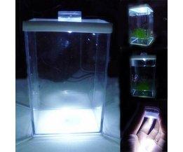 Litet akvarium